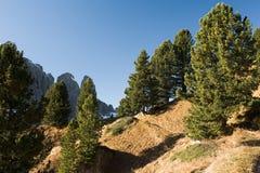 Forêt sur le chemin au Gherdenacia Photographie stock libre de droits