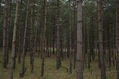 Forêt sur le chemin aux dunes image libre de droits