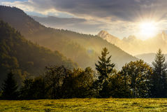 Forêt sur le flanc de coteau dans haut Tatras au coucher du soleil Photos stock