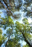 Forêt sur le fond du ciel Photo stock