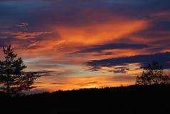 Forêt sur le fond orange-foncé de nuages image stock