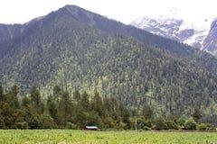 Forêt sur le plateau Photo libre de droits