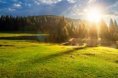 Forêt sur le pré herbeux au lever de soleil brumeux images libres de droits