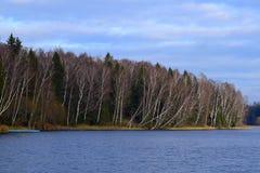 Forêt sur le rivage du lac Photos libres de droits