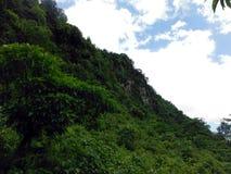 Forêt sur une montagne de l'Himalaya Photo stock