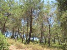 Forêt sur une montagne en Turquie image libre de droits