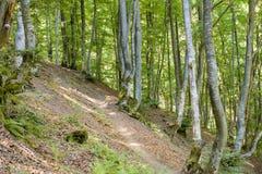 Forêt sur une pente de montagne Photographie stock