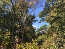 Forêt tôt d'automne, arbres Photographie stock