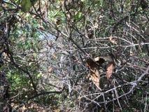 Forêt tôt d'automne, arbres et branches nues Photos stock