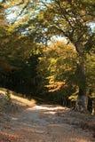 Forêt tôt d'automne (Croatie) Photographie stock libre de droits