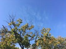 Forêt tôt d'automne, vers le haut de vue sur des arbres, ciel bleu Image stock