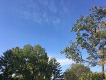 Forêt tôt d'automne, vers le haut de vue sur des arbres, ciel bleu Photographie stock libre de droits