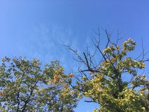 Forêt tôt d'automne, vers le haut de vue sur des arbres, ciel bleu Image libre de droits