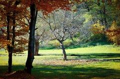 forêt tôt d'automne Photographie stock
