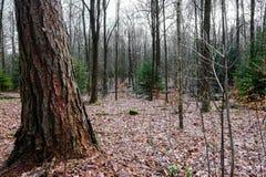 Forêt tôt de source Image libre de droits