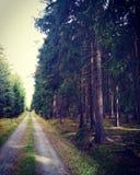 Forêt tchèque, automne photo libre de droits
