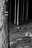 Forêt tchèque de pin Photo libre de droits