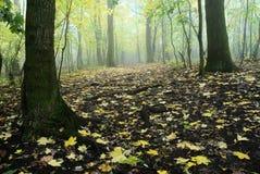 Forêt tempérée à feuilles caduques automnale Photographie stock libre de droits