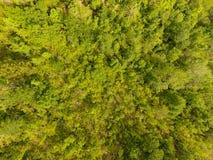 Forêt tempérée Photos stock