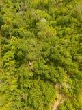 Forêt tempérée Images stock