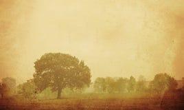 Forêt texturisée de vintage Photos libres de droits
