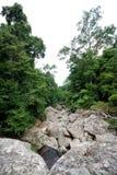 Forêt thaïlandaise Images stock