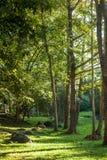 forêt Thaïlande Images stock