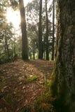 Forêt tranquille Photos libres de droits