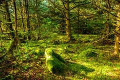 Forêt tropicale à la déception de cap, Washington photographie stock