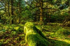 Forêt tropicale à la déception de cap, Washington photos libres de droits