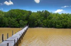 Forêt tropicale photo libre de droits