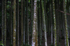 Forêt tropicale Image libre de droits