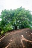 Forêt tropicale au Bornéo Photos stock
