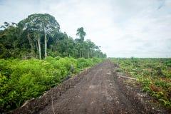 Forêt tropicale au Bornéo Images libres de droits