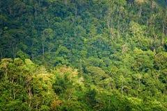 Forêt tropicale au lever de soleil Photographie stock libre de droits