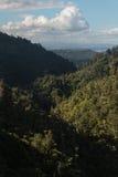 Forêt tropicale aux chaînes de Waitakere Image libre de droits