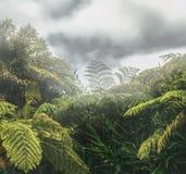 Forêt tropicale tropicale avec la végétation sauvage une île tropicale images libres de droits