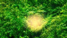 Forêt tropicale avec le vert de nature du soleil Image libre de droits