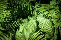 Forêt tropicale avec les usines mélangées et la lumière en baisse Photo stock