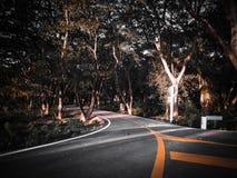 Forêt tropicale d'arbre de route en été photos stock