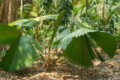 Forêt tropicale d'Asie du Sud-Est Photographie stock