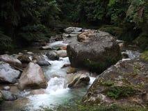 Forêt tropicale forêt d'Equateur, Amazone, Shinchiwarmi Photographie stock libre de droits