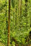 Forêt tropicale d'Esquinas, Costa Rica Photos libres de droits