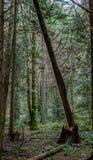 Forêt tropicale dans au nord-ouest Pacifique Image stock
