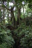 Forêt tropicale dans Bali images libres de droits