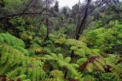 Forêt tropicale dans des environs de tube de lave de thurston Images stock