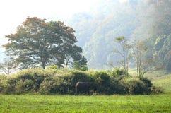 Forêt tropicale dans l'Inde du sud Image libre de droits