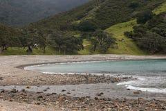 Forêt tropicale dans la baie pierreuse, péninsule de Coromandel Images libres de droits