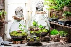 Forêt tropicale dans un pot en tant qu'économies l'idée de la terre Image stock