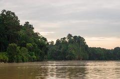 Forêt tropicale de début de la matinée le long de la rivière de Kinabatangan, Sabah, BO images libres de droits